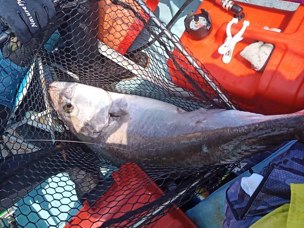 名護湾でのジギング。11.4kgカンパチ。タモ網からはみ出る。
