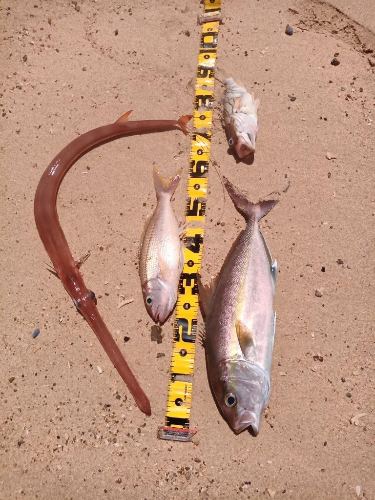 2020年7月11日名護湾ジギング釣果  カンパチ、ナガサキフエダイ、カケハシハタ、アカヤガラ